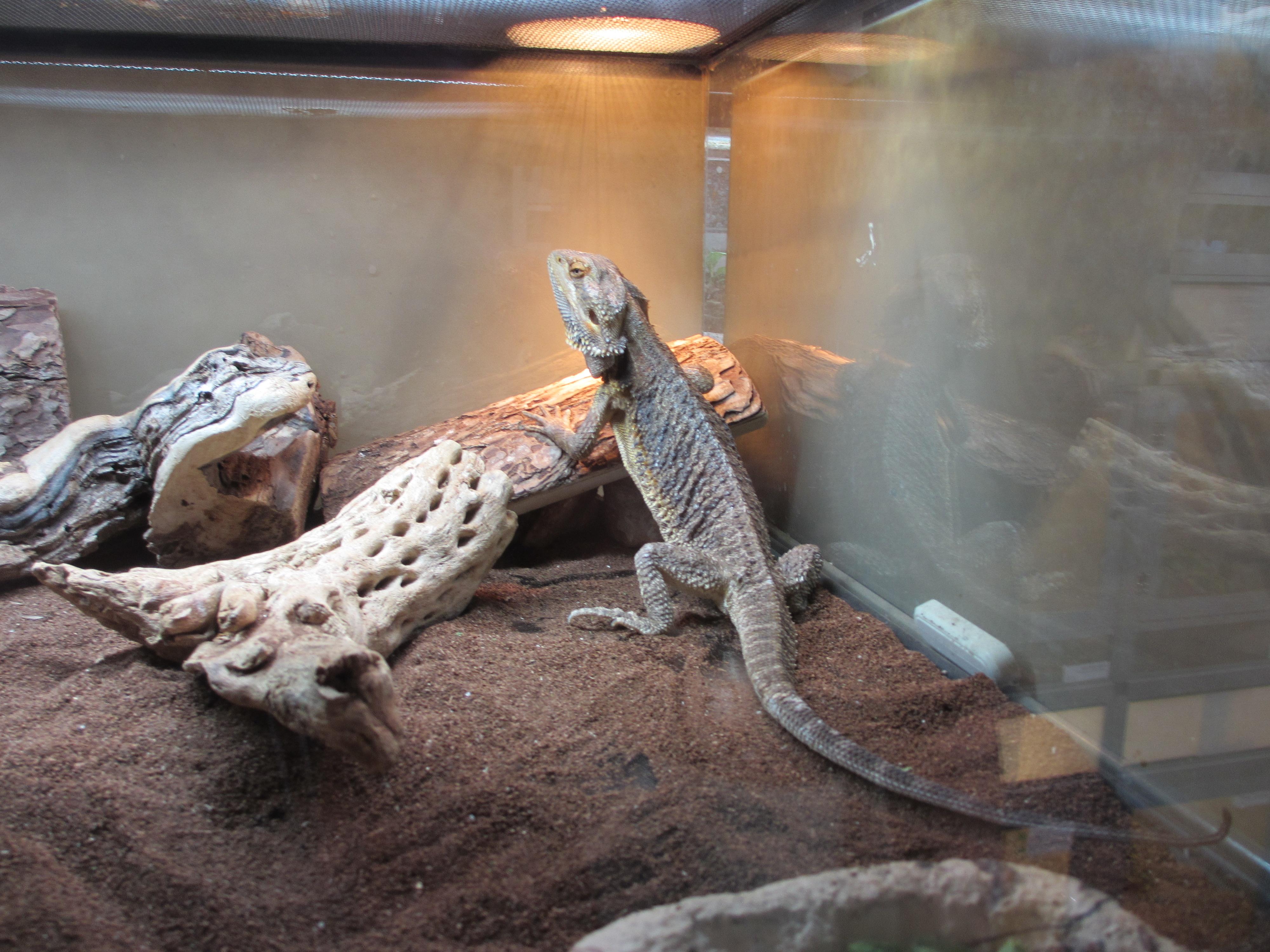 Kalamazoo Reptile Show