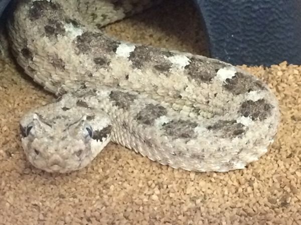 Snakes alive 1st response wildlife posts to help for Az game and fish phone number