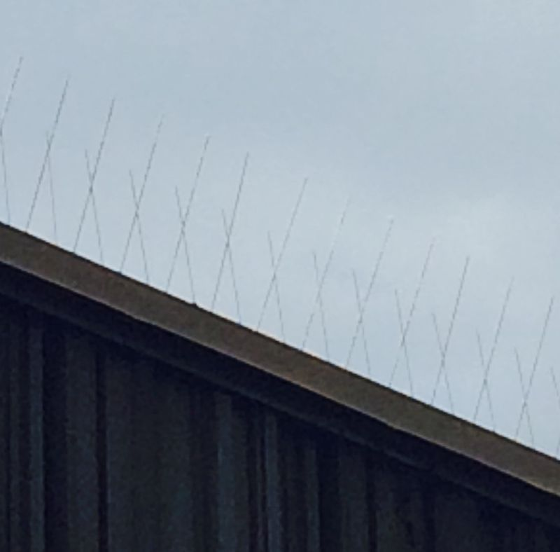 Bird Deterrents-bird spikes